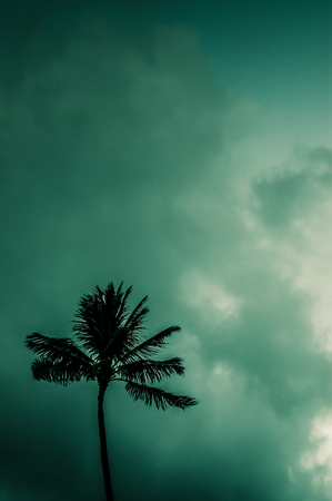 storms: Retro Filtered Photo Of Palm Tree Against Atmospheric Sky In Hawaii