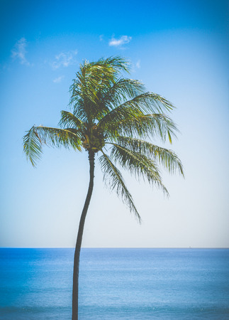 filtered: Retro Filtered Single Palm Tree By The Ocean In Hawaii Stock Photo