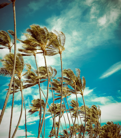 Retro Styled Photo Of Vintage Palm Trees In The Wind In Hawaii Stock Photo