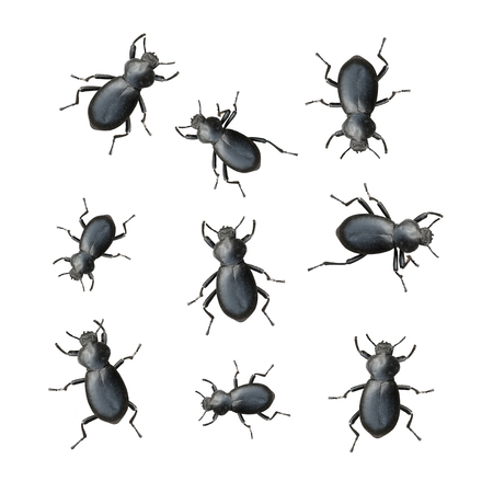 crawly: Creepy Crawly Black Beetles On A White Background