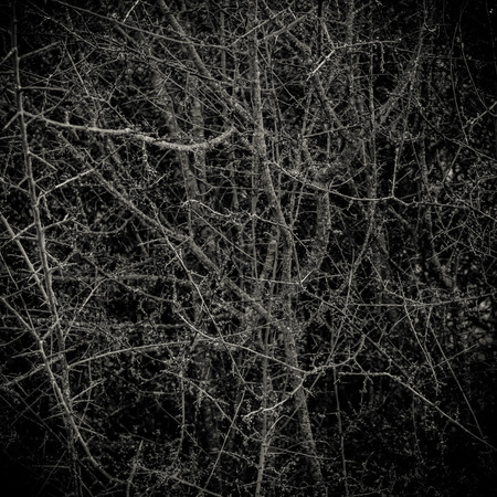 trees with thorns: Conceptual Image Of A Dark Thorny Bush Forest In A Forest Stock Photo