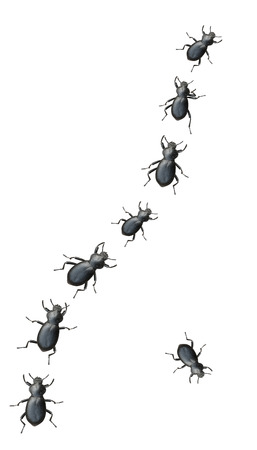 marching: Creepy Crawly Black Beetles Marching In A Line On A White Background