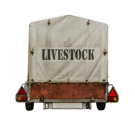 towed: Rear Of Towed Trailer With Livestock Sign On Canvas Tarp On White Background