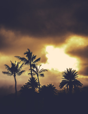 windward: Retro Style Image Of Hawaii Palm Trees At Sunset With Copy Space
