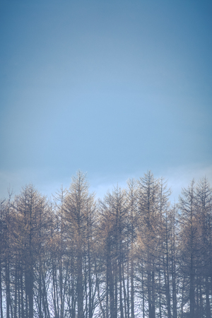 trees seasonal: Retro Vintage Style Seasonal Image Of Frost Topped Trees With Clear Blue Sky And Copy Space