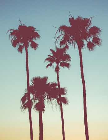 Retro Style Image Of Palm Trees At Sunset 版權商用圖片
