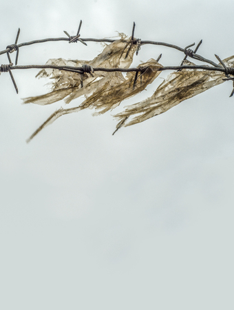 barbed wire fence: Detail Of Grungy Barb Wire And Plastic In A Prison Yard Or Border With Copy Space