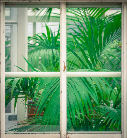 Gardening Detail Of Tropical Plants (Palms) Through A Rustic Greenhouse Window