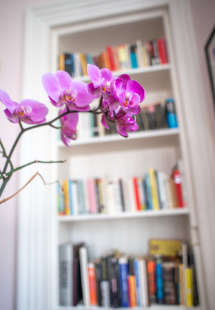 Detail Of A Beautiful Purple Orchid Flower Against A Retro Vintage Bookcase In A Victorian Apartment Or Flat