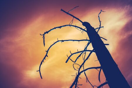 Image Of A Burned Tree Against A Fiery Red Sky In The Aftermath Of A Forest Fire Stock Photo - 125887158