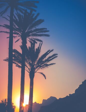 The Sun Behind Palm Trees And Mountains During A Tropical Sunset In Hawaii Archivio Fotografico