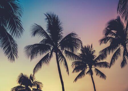Palmiers au coucher du soleil de style rétro à Hawaii avec des couleurs vives