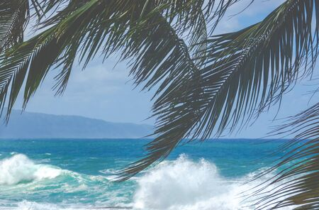 Big Waves On Hawaii's North Shore With Palm Trees In The Foreground