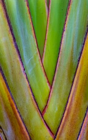 Abstract Background Texture Of A Tropical Plant