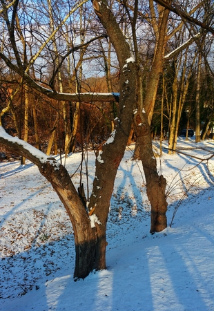 Wooded area with snow on the ground,  located behind Cold Spring Light Rail station (Baltimore, MD).  Early morning.  Shadeshadows  on the ground.  Open field.  Scattered trees.  Trees in foreground on side of hill. Banco de Imagens