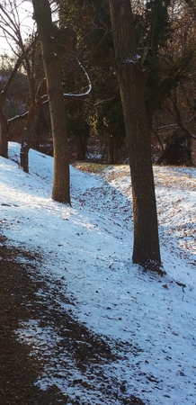 Row of trees on side of hill.  Early morning.  Snow on the ground.  Trees located at Cold Spring Light Rail station (Baltimore, MD). Banco de Imagens