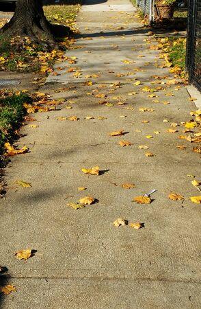 Sidewalk on N. Pulaski Street (Baltimore,MD) with fallen, autumn leaves. Banco de Imagens