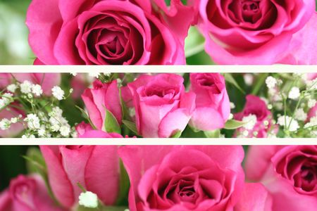 Three Pink Roses Landscape Images Stock Photo