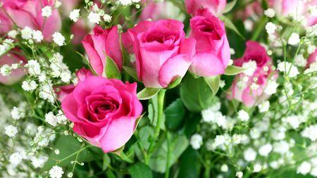 florish: Pink roses bouquet close up