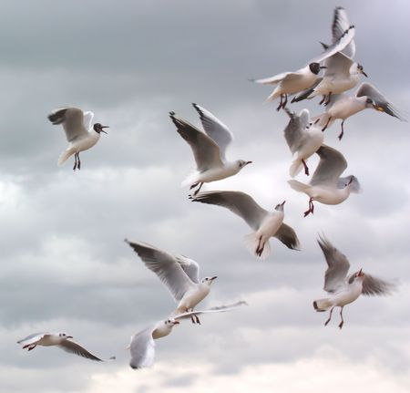 Seagulls fighting for food