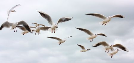 Flock of flying seagulls Stock Photo