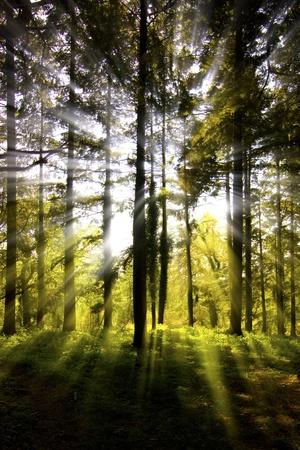 Bright sunburst through a wooded area photo