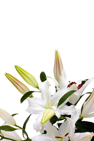 lillies: White lilies with copy space