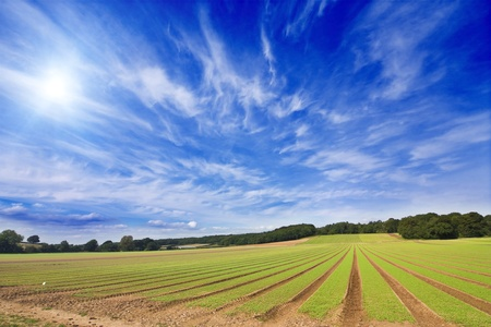 british food: Farmland furrows in perspective with blue skies Stock Photo