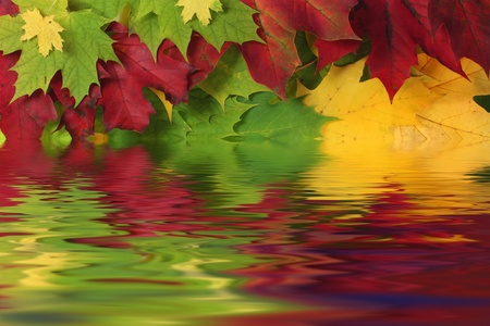 Autumn leaves in water with reflection photo