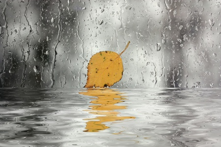 Rain on window with leaf