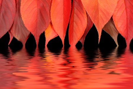 Red autumn leaves dipping into water photo