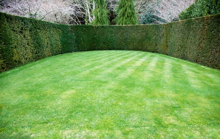Trimmed hedge around oval lawn