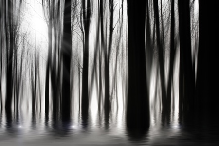 Spooky woods in BW with flooding photo