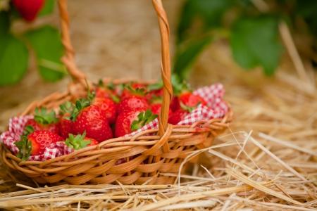 Strawberries in a wicker basket photo