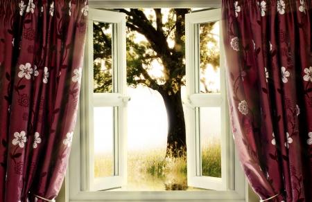 ventana abierta interior: Ventana de la vista en �rbol en movimiento