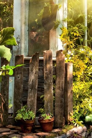 Overgrown garden in morning sunlight photo