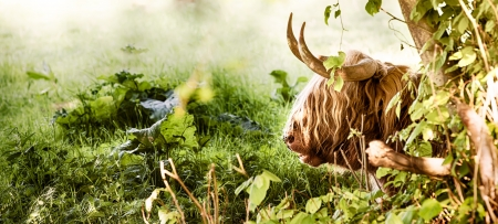 high dynamic range: Highland cow resting by a tree in a grassy field close up Stock Photo