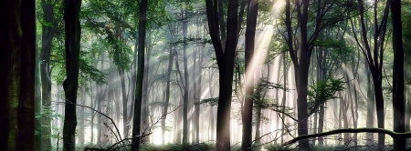 Deep forest landscape with misty morning sunlight 免版税图像 - 24285273