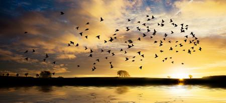 Mooie zonsopgang over water met gouden wolken en een zwerm vogels Stockfoto