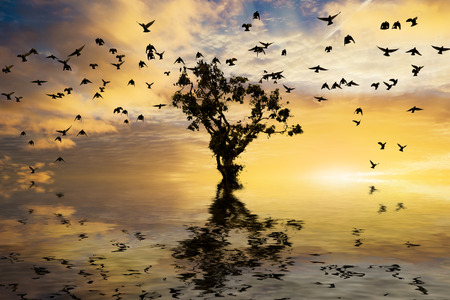 viewpoints: Beautiful sunrise with single tree and water with golden clouds and a flock of birds