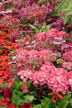 lizzie: Summer flowers in full bloom with red and pink display