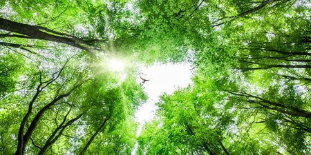 Looking up through fresh green tree canopy to sky and sunlight with a bird soaring overhead