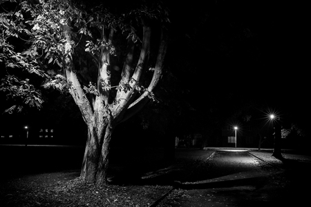 after midnight: Rural street scene at night, black and white with trees lit by lamp post. Empty streets in Autumn