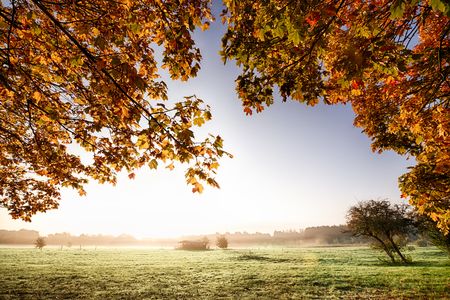 footway: View though the overhanging golden autumn leaves to a misty sunrise parkland