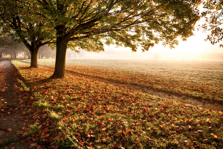 off path: Amazing autumn leaves and trees with a misty sunrise. A path leads off into the distance