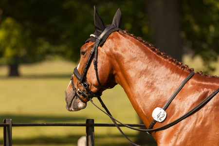HOUGHTON, NORFOLKENGLAND - May 25th 2017: Houghton International Horse Trials 2017 Chilli Knight. Including cross country, eventing, show jumping and dressage at the top level