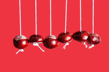 horse chestnut seed: Conkers on strings hanging next to each other with a red background Stock Photo