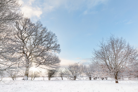 Snow covered tree line with early morning sunrise shining through the bare brances. Landscape in Norfolk UK