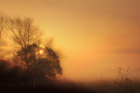 Rural misty meadow at sunrise with an orange glow. Relaxing natural landscape at dawn with bare autumn trees