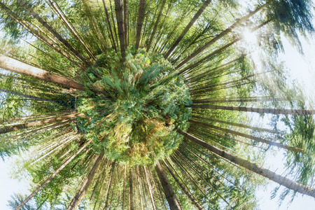 Mini planet forest view point with a global 360 degree angle. Fresh viewpoint of trees and woodland plants Reklamní fotografie